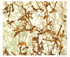Bones, 2012, Adriana Corral